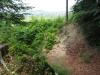 Ein Hohlweg im Wuhrenholz