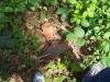 Neuzeitliche Fundgegenstände mitten im Wald