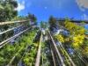 Unterwegs in den Wilener Wäldern (Foto Dominik Weezly)