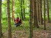 Suche im Wald