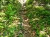 Weg zur mittelalterlichen Ruine Kranzenberg