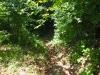 Weg zur mittelalterlichen Ruine