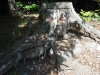 Überreste des mittelalterlichen Wehrturms beim Kranzenberg