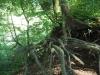 Im Wuhrenholz, Wilen bei Wil