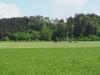 Blick auf das Wuhrenholz mit seinen Hohlwegsystemen, Wilen bei Wil