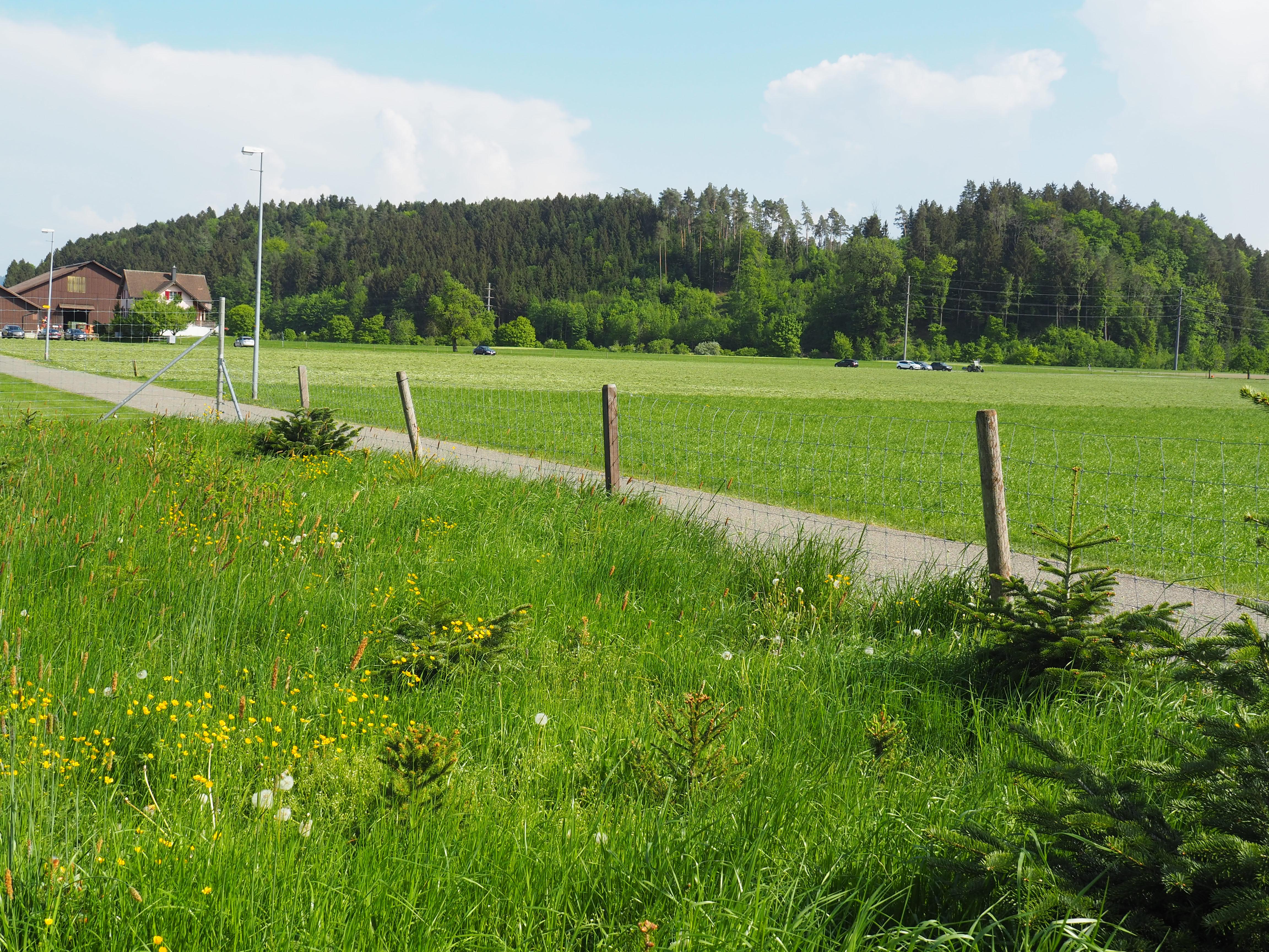 Wuhrenholz